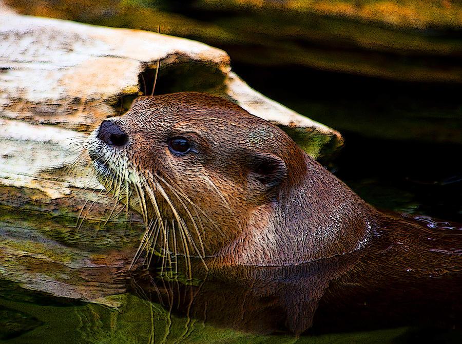 Otter Digital Art - Otter Way by Tito Santiago