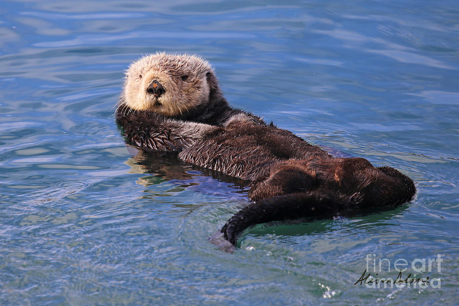 OTTERLY ADORABLE by Alison Salome