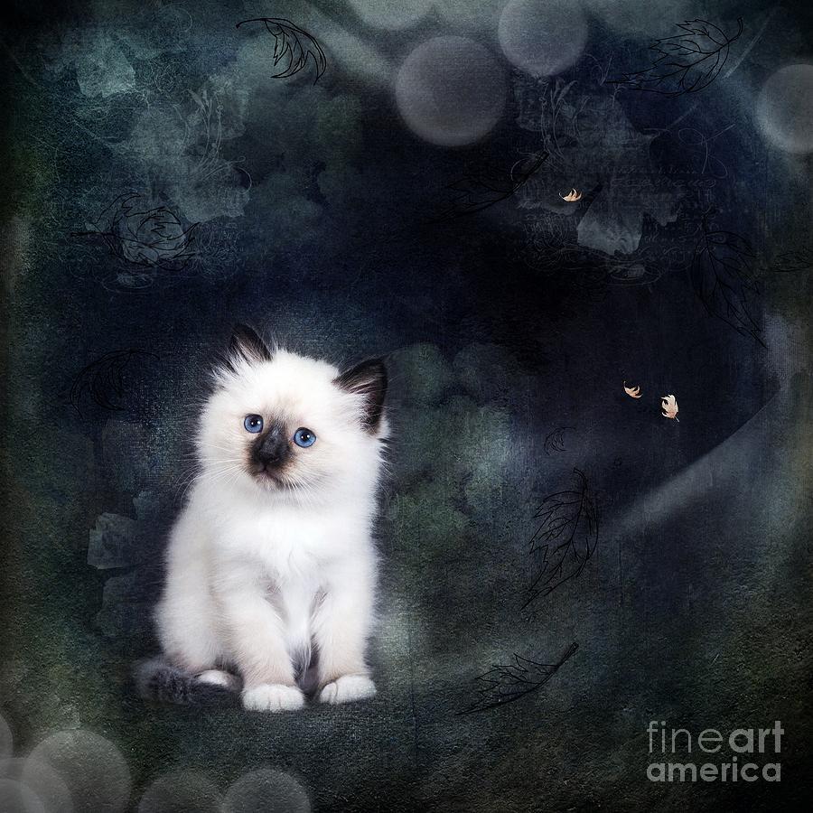 Magic Digital Art - Our Cat World by Monique Hierck