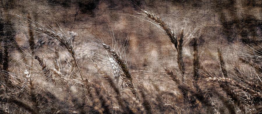 Textured Photograph - Our Daily Bread by Garett Gabriel