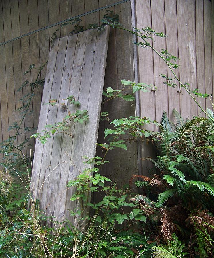Old Barn Photograph - Out Back by Angi Parks