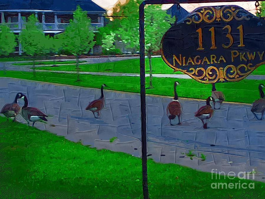 Canadian Geese Painting - Out For A Stroll by Deborah MacQuarrie-Selib