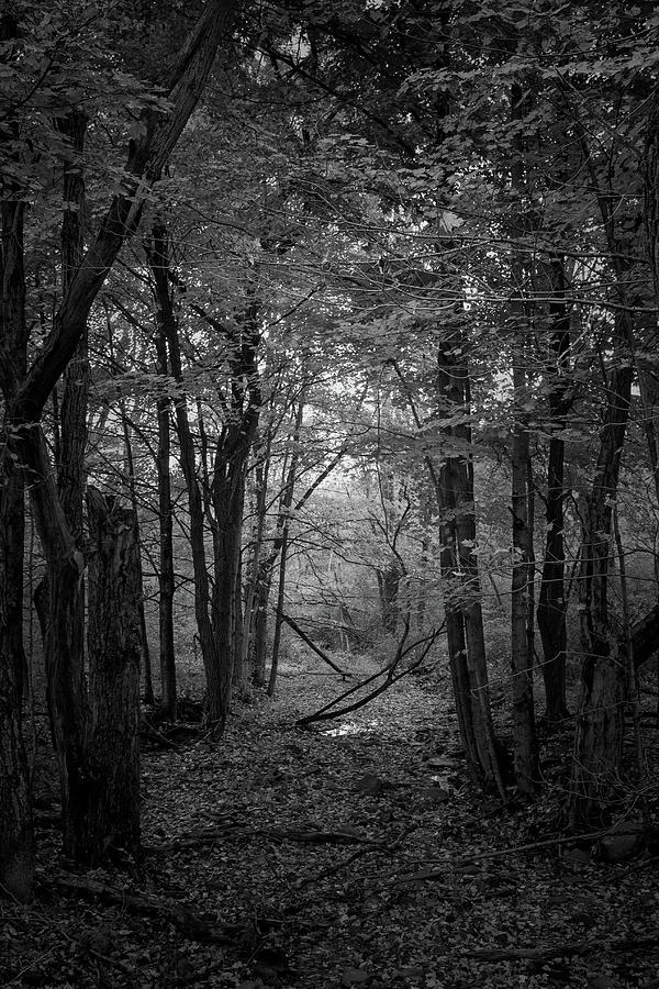 Black And White Photograph - Out From The Darkness by Frank Morales Jr