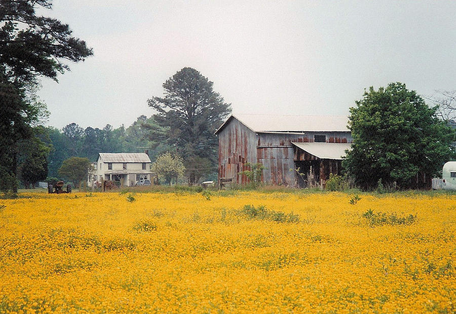Americana Photograph - Out In The Country by Robert Boyette