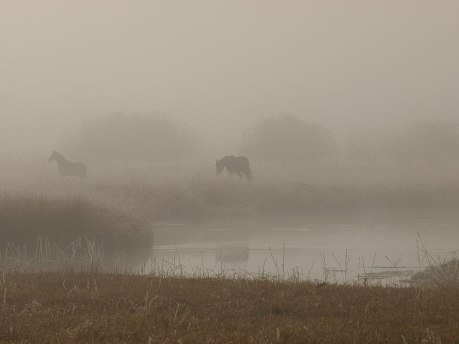 Out In The Fog Photograph