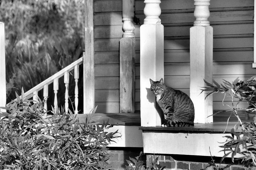 Animals Photograph - Out In The Sun by Jan Amiss Photography