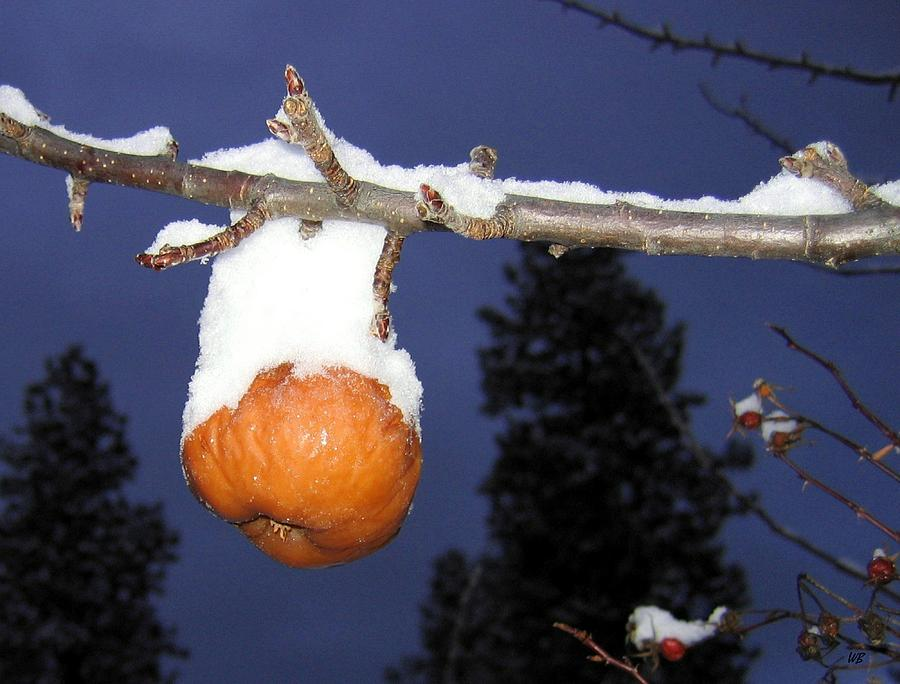Apple Photograph - Out Of Season by Will Borden