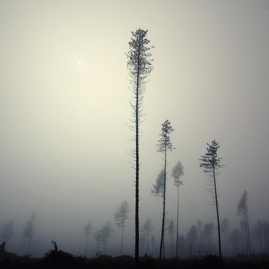 Mist Photograph - Out of the Gray Ashes by Michal Karcz