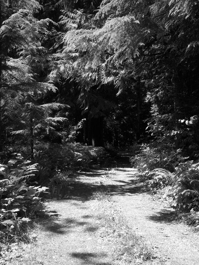 Trees Photograph - Out Of The Into The Dark Bw by Ken Day