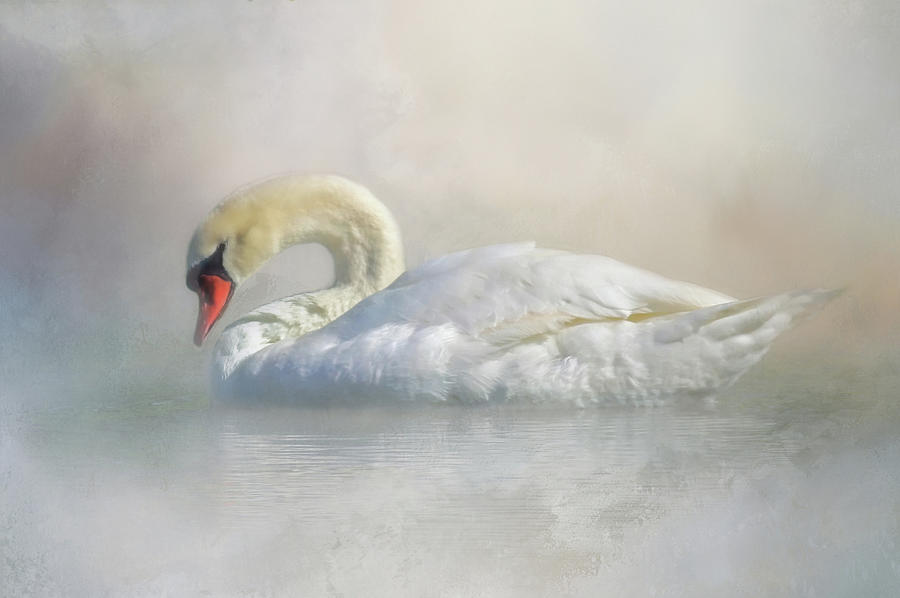 Mute Swan Photograph - Out Of The Mist by HH Photography of Florida