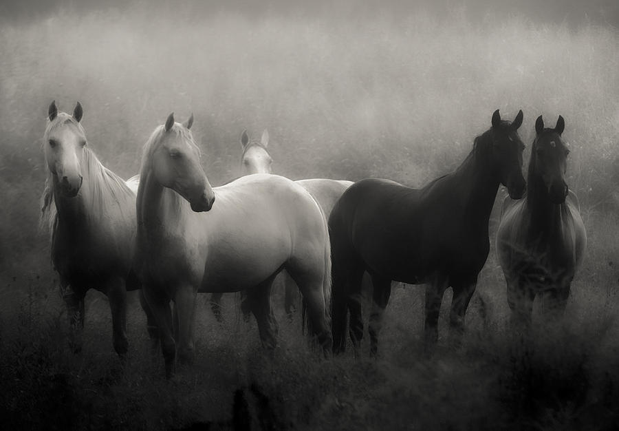 Horse wall art photograph out of the mist by ron mcginnis