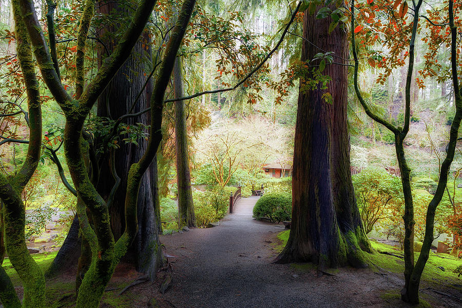 Portland Photograph - Out Of The Woods by David Gn