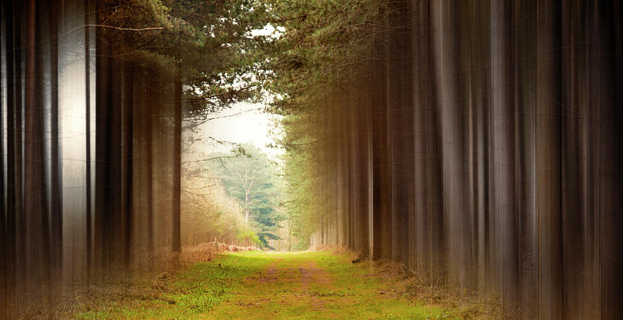 Forest Photograph - Out Of Woods by Svetlana Sewell