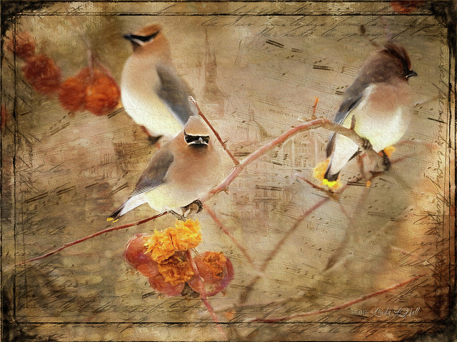 Cedar Waxwings Photograph - Out on a Limb by Linda Lee Hall
