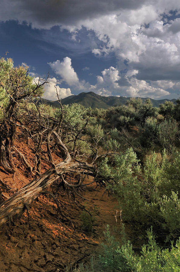 Landscape Photograph - Out On The Mesa 2 by Ron Cline
