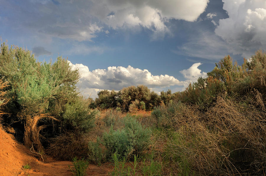 Landscape Photograph - Out On The Mesa 4 by Ron Cline