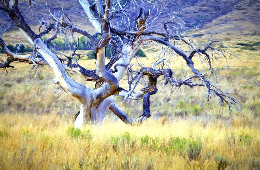 Out Standing In My Field Digital Art by James Steele