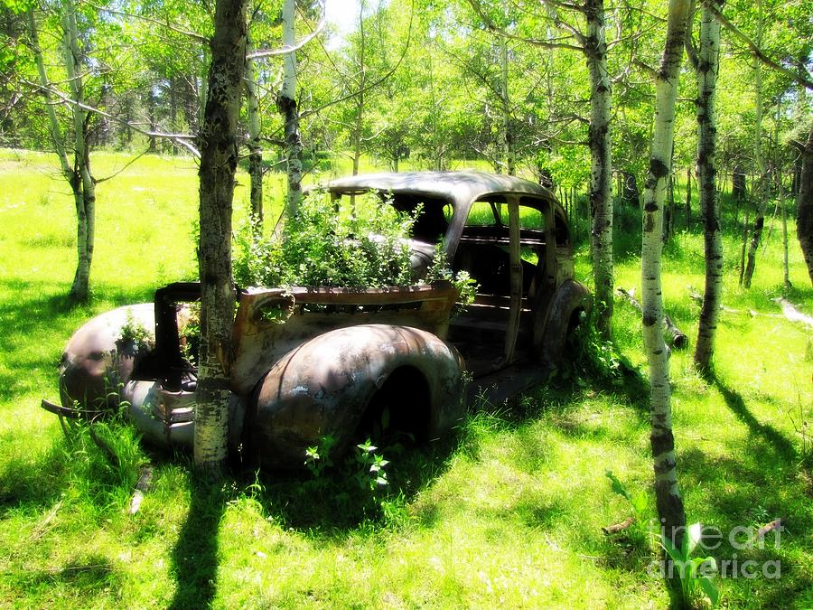 Out To Pasture Photograph