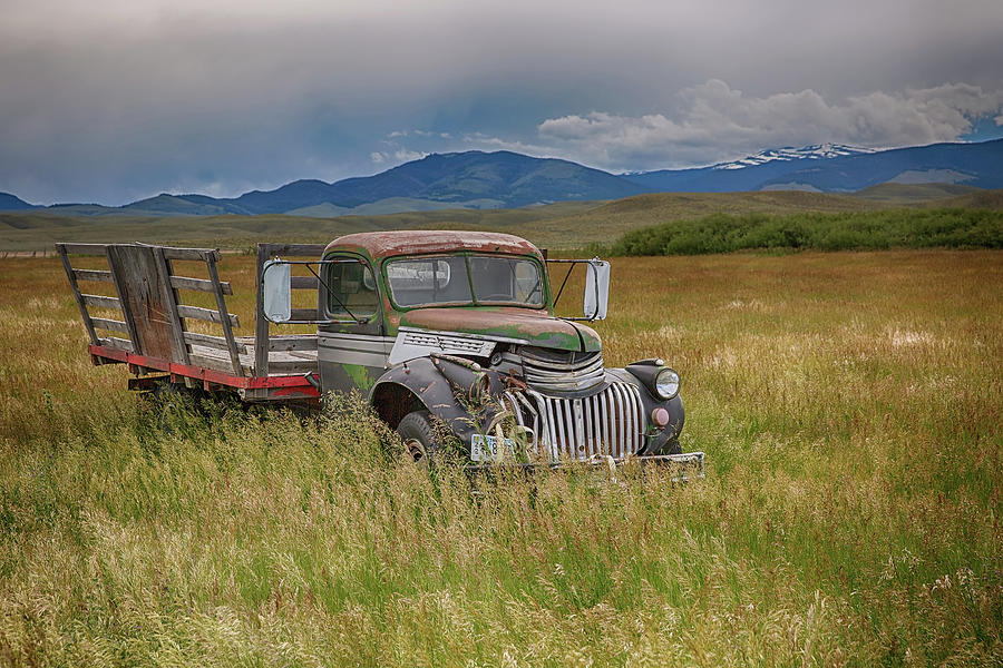 Out to Pasture by Eilish Palmer