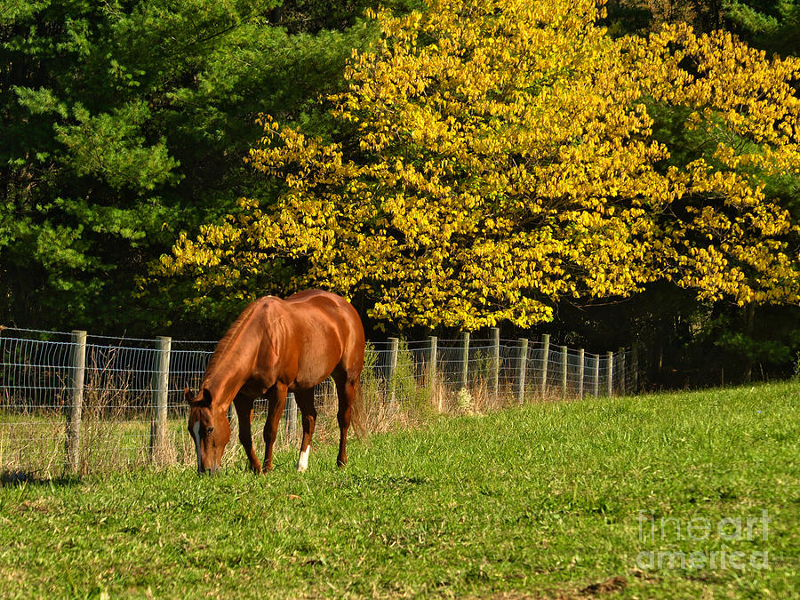 Horse Photograph - Out To Pasture by Kathy Jennings