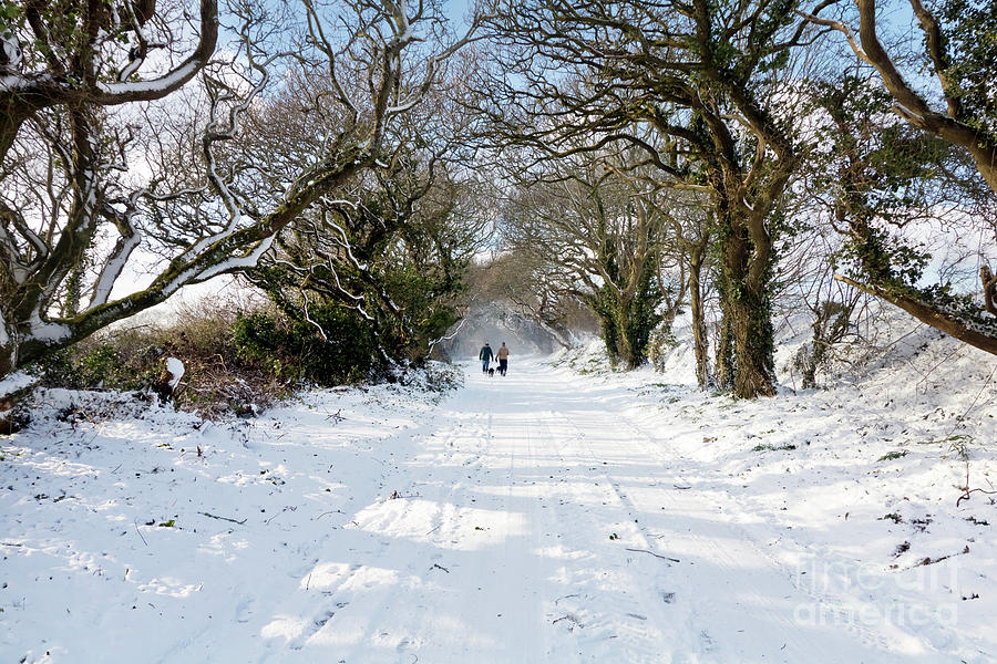 Out Walking In The Snow Photograph