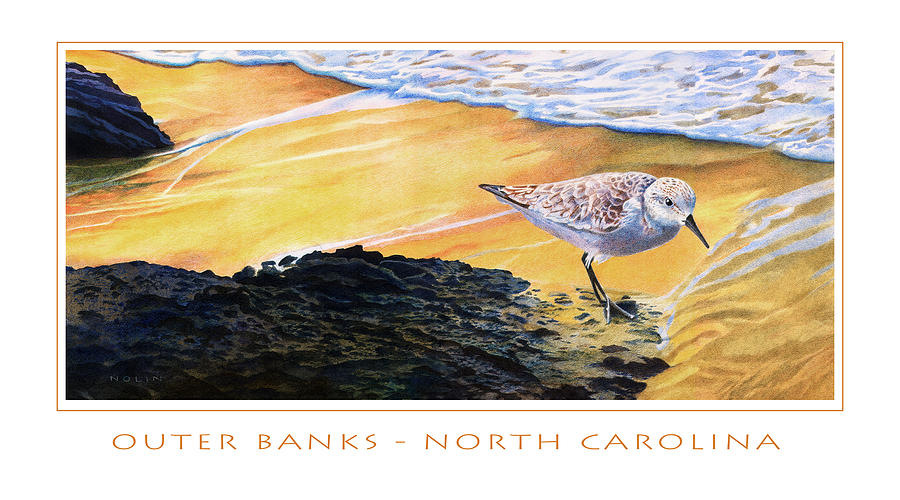 Sanderling Mixed Media - Outer Banks Sanderling by Bob Nolin