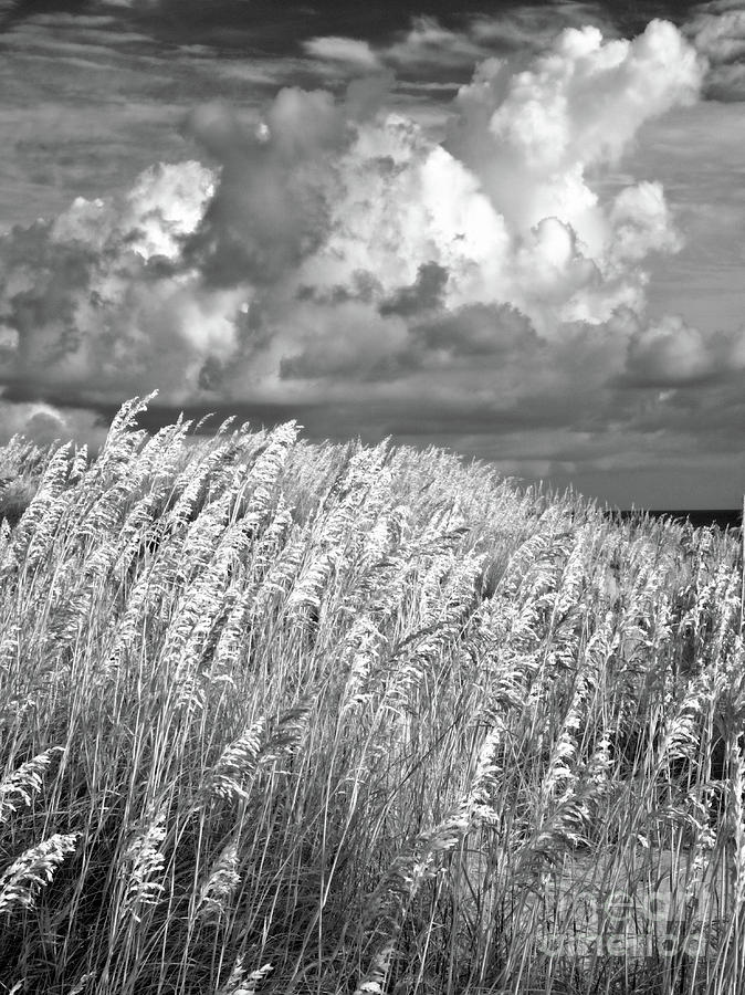 North Carolina Photograph - Outer Banks - Sea Oats Swaying In A Storm Bw by Dan Carmichael