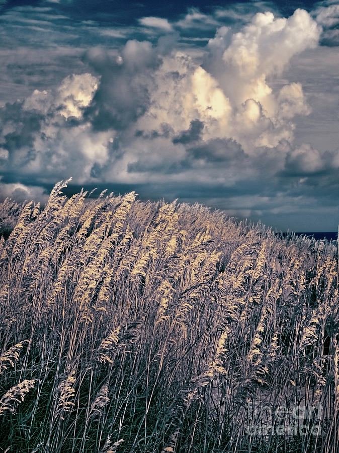 North Carolina Photograph - Outer Banks - Sea Oats Swaying In A Storm Fx by Dan Carmichael