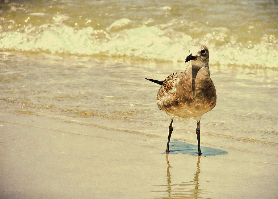Seagull Photograph - Outerbanks Gull by JAMART Photography