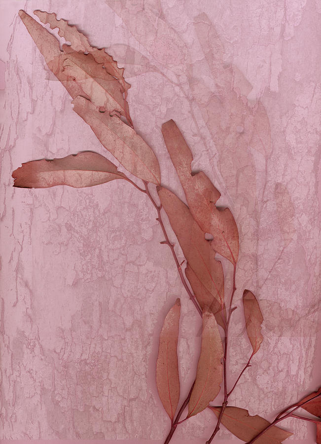 Nature Digital Art - Over Pink by Eileen Shahbazian