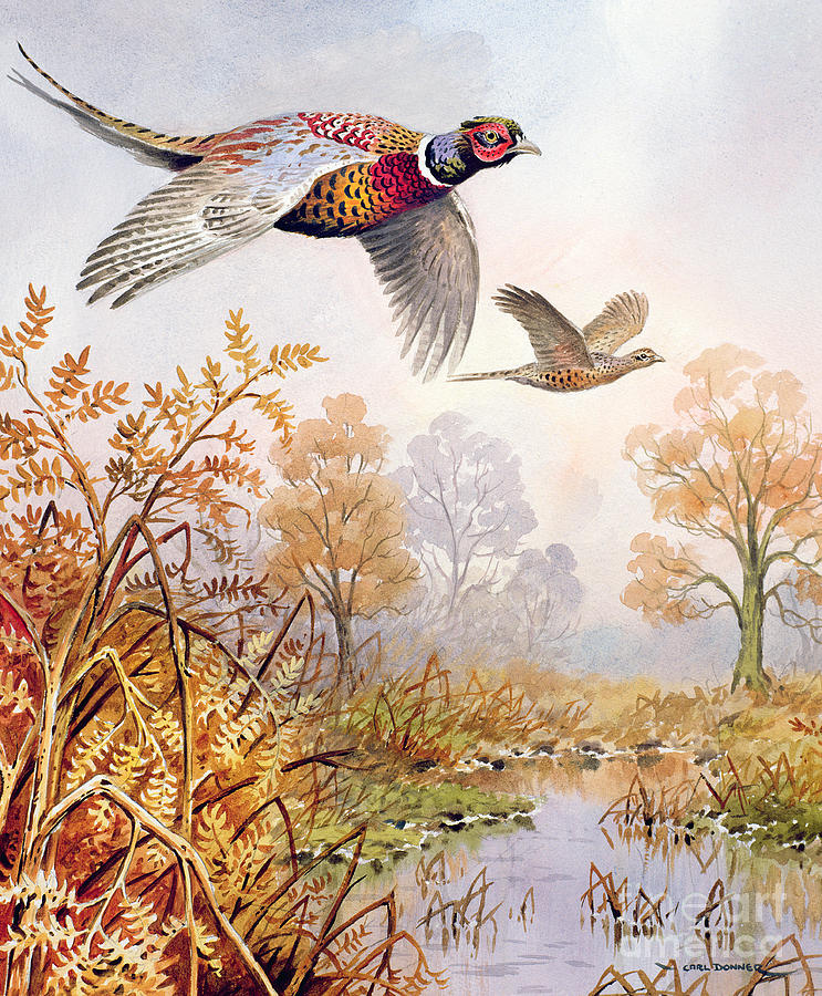 Pheasants Painting - Over The Fen by Carl Donner