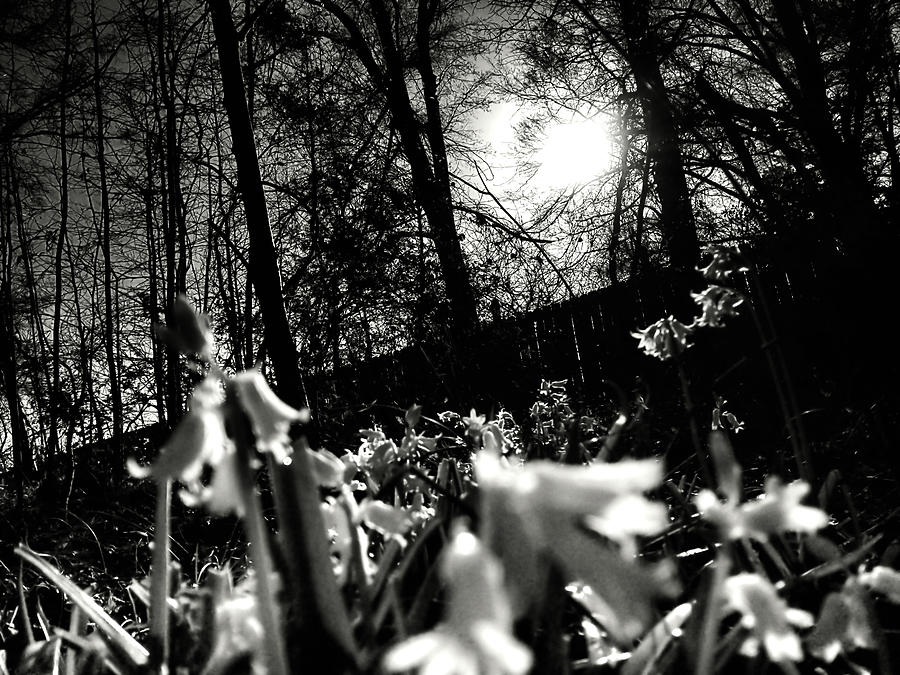 Over The Fence in Black and White by Morgan Carter