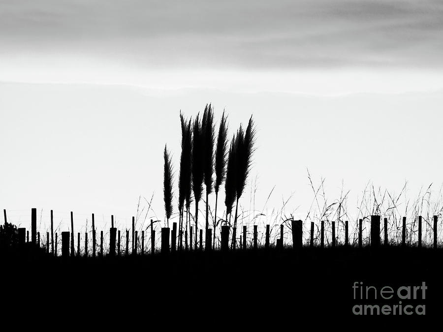 Fence Photograph - Over The Fence by Karen Lewis