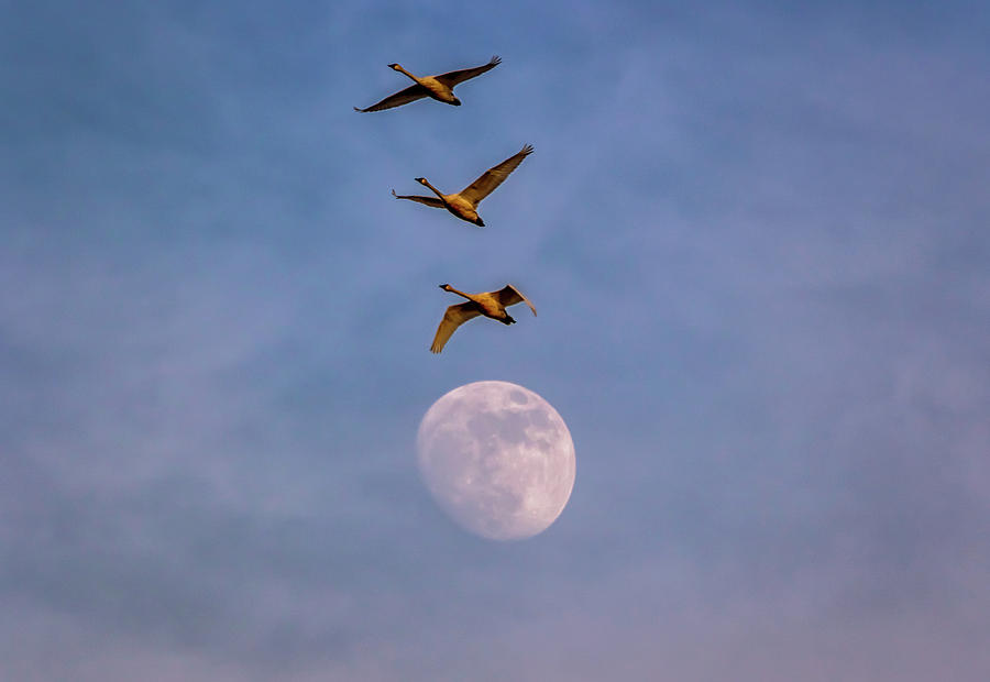 Oregon Photograph - Over The Moon by Marc Crumpler