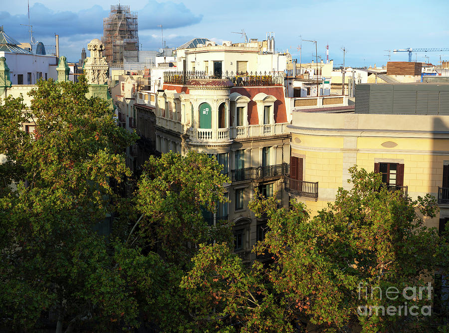Trees Photograph - Over The Trees On La Rambla In Barcelona by John Rizzuto