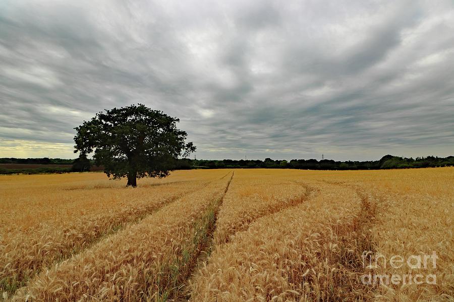 Overcast skies with wheat field by Julia Gavin