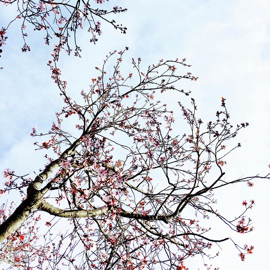 Overhead Branches Photograph by Julie Gebhardt