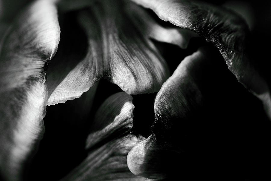 B&w Photograph - Overlap-black And White by Brian Pflanz