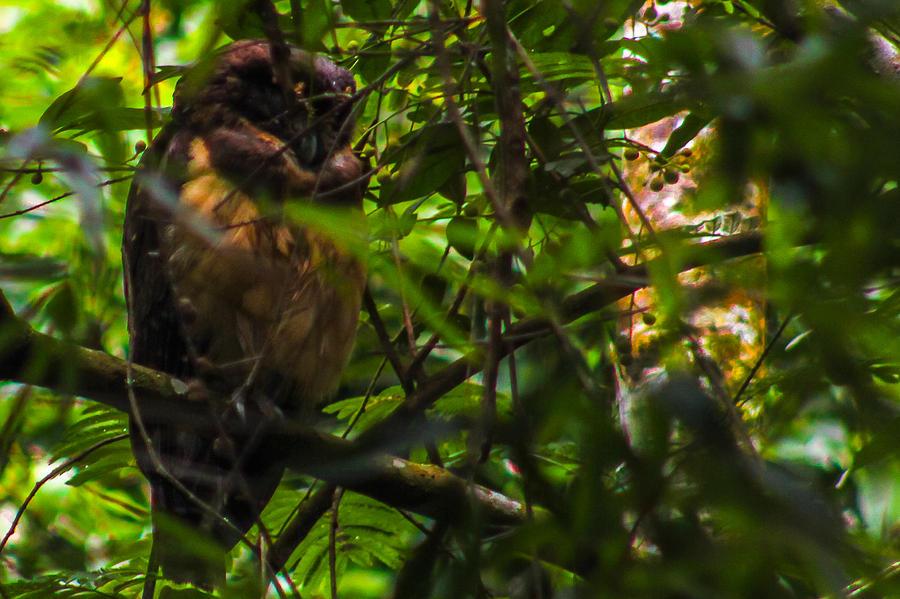 Owl Photograph - Owl-1 by Fabio Giannini
