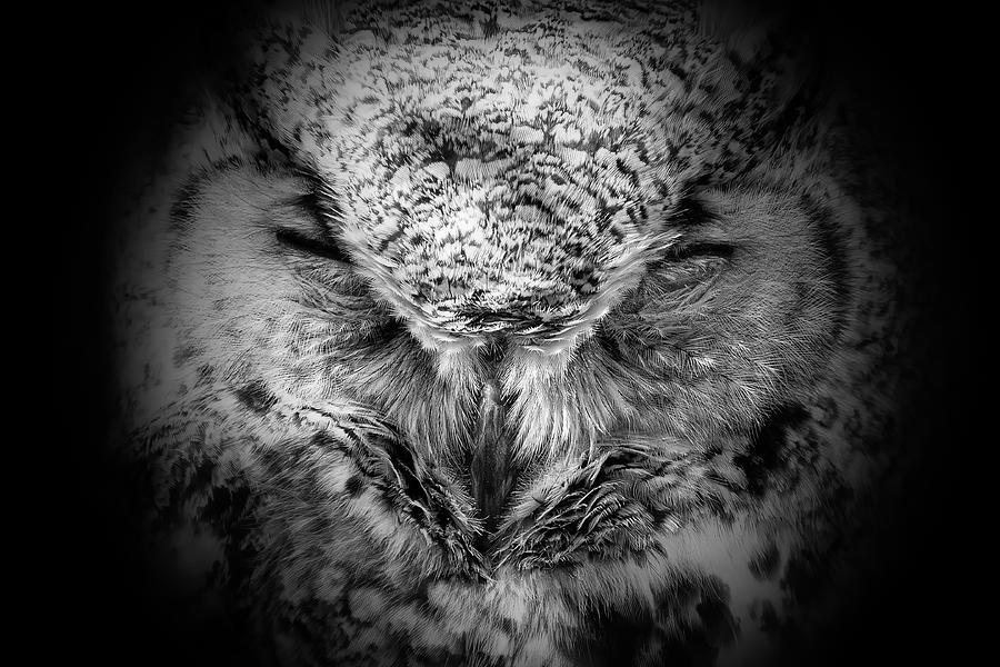 Owl 6 Photograph