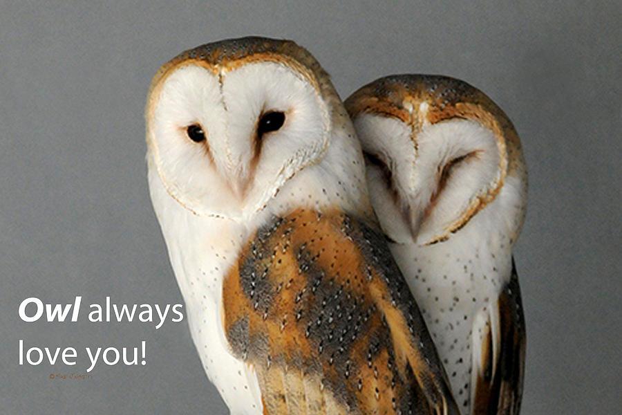 Owl always love you by Sue Jarrett