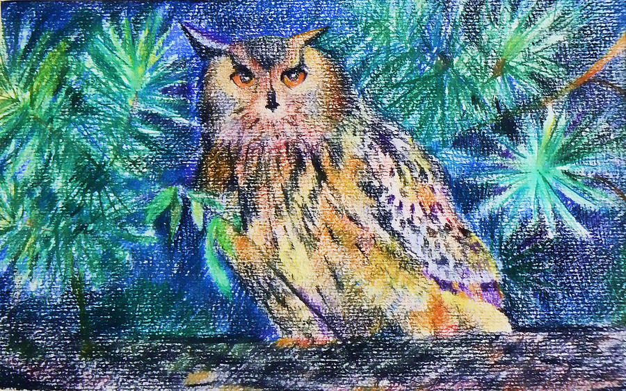 Owl Drawing - owl by Anastasia Michaels