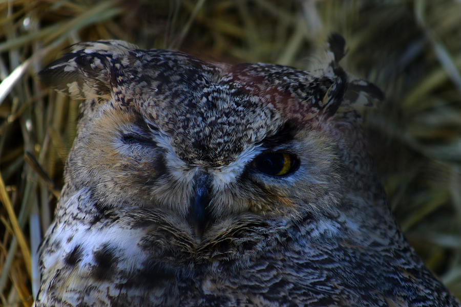 Owl Photograph - Owl by Anthony Jones