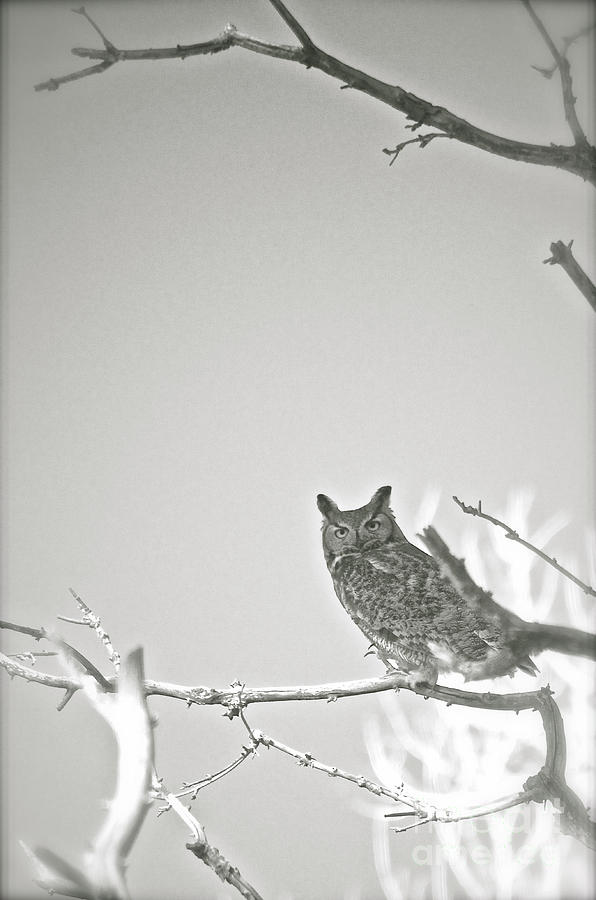 Owl Be Seeing You by Cindy Schneider