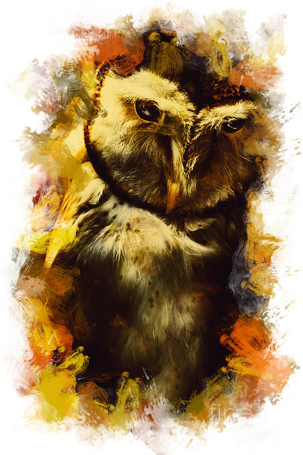 Owl Photograph - Owl Birds Of The Night by Jorgo Photography - Wall Art Gallery