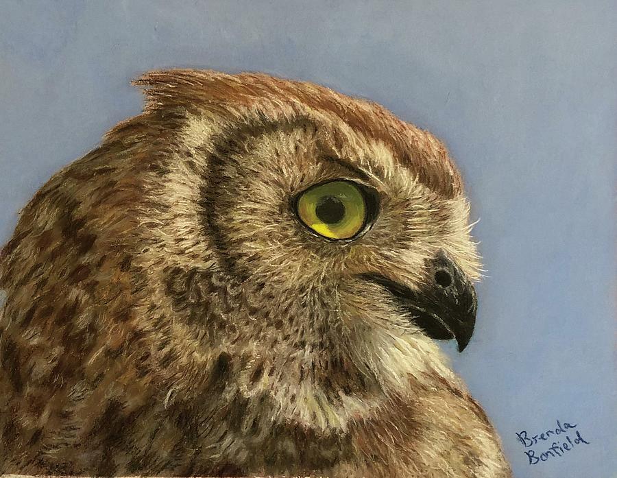 Owl by Brenda Bonfield