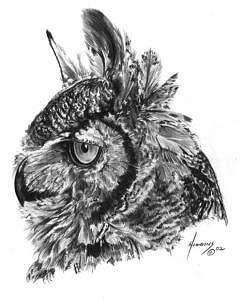 Owl Drawing - Owl Bust by Don Higgins