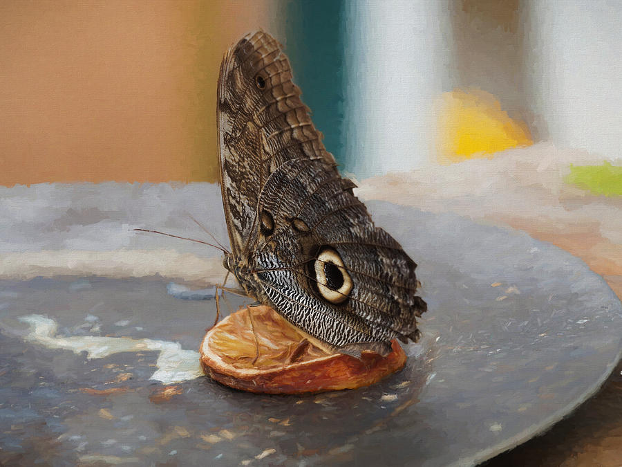 Owl butterfly-1 by Paul Gulliver