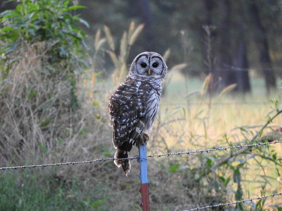 Owl Photograph - Owl Cherish This Moment Forever by Roxanne Raber