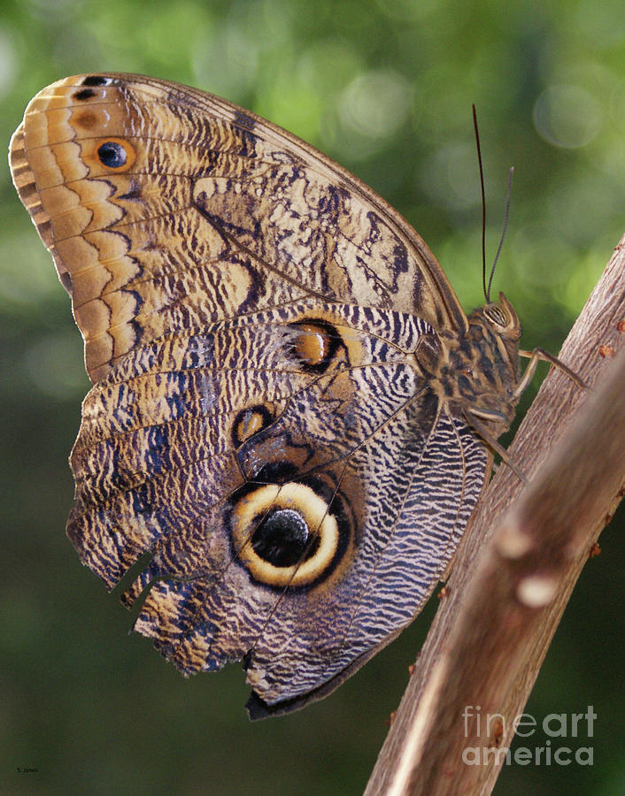 Butterfly Photograph - Owl Close Up by Shelley Jones